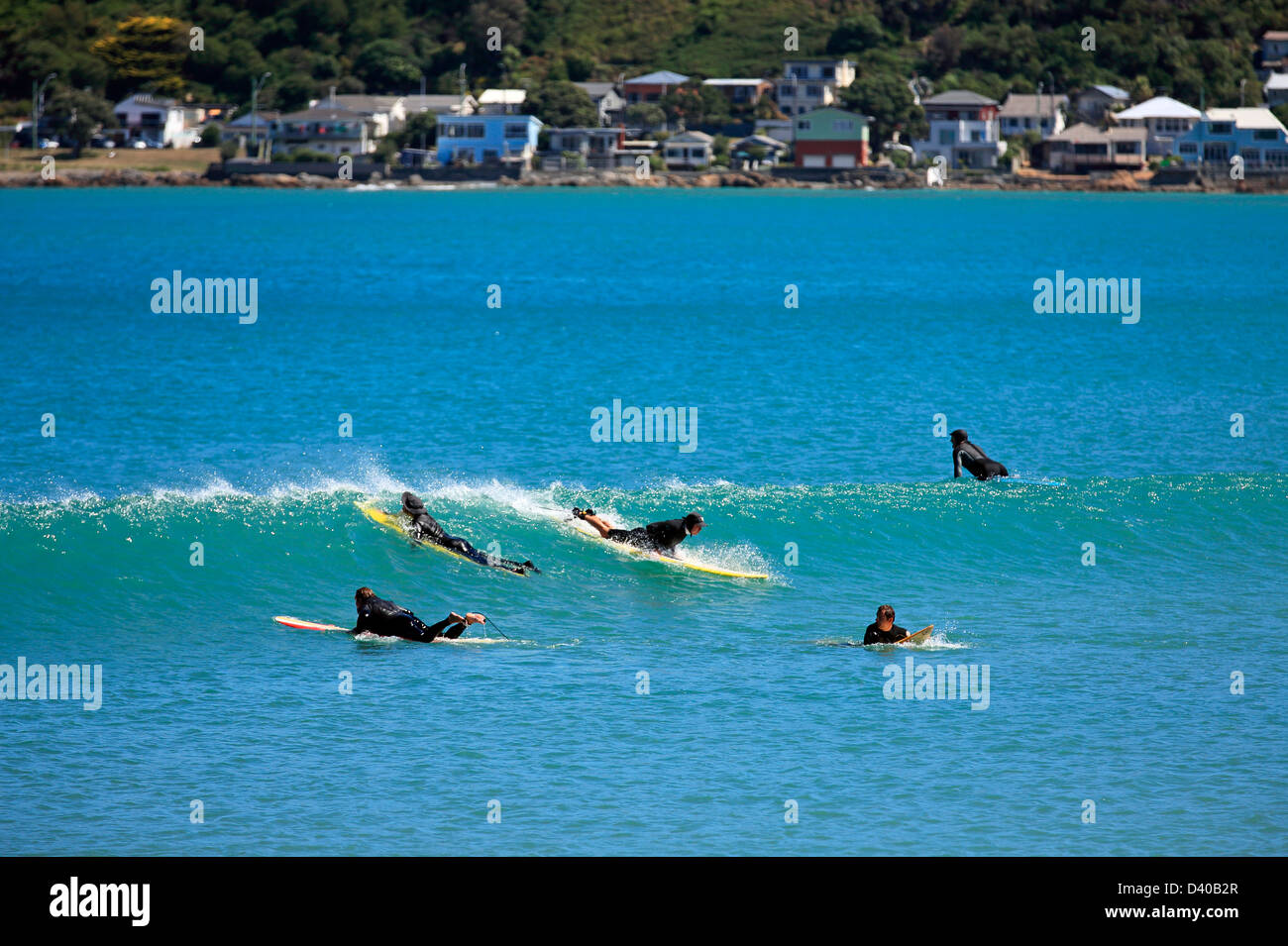 lyall bay surf guide